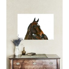 Horse Wall Canvas