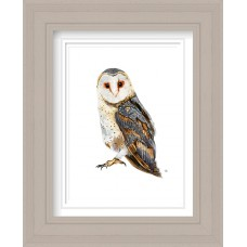 Barn Owl Print Framed Maine