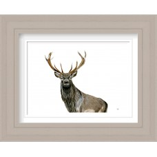 Highland Stag Print Framed Maine