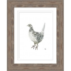 Pheasant Female Print Framed Natur