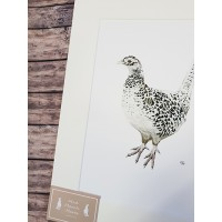 Pheasant Female Mounted Print A4